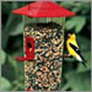 Combo Feeder (Bird Feeders) (Seed Feeders) Everything